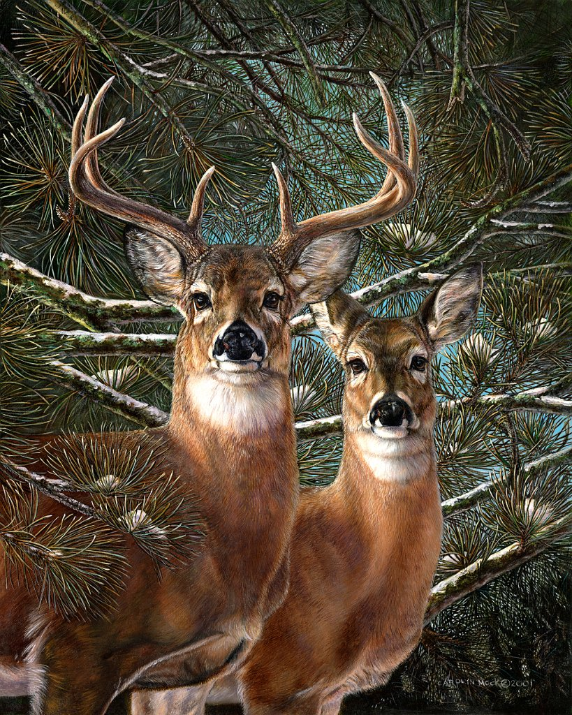 A pair of deer stand by pine trees