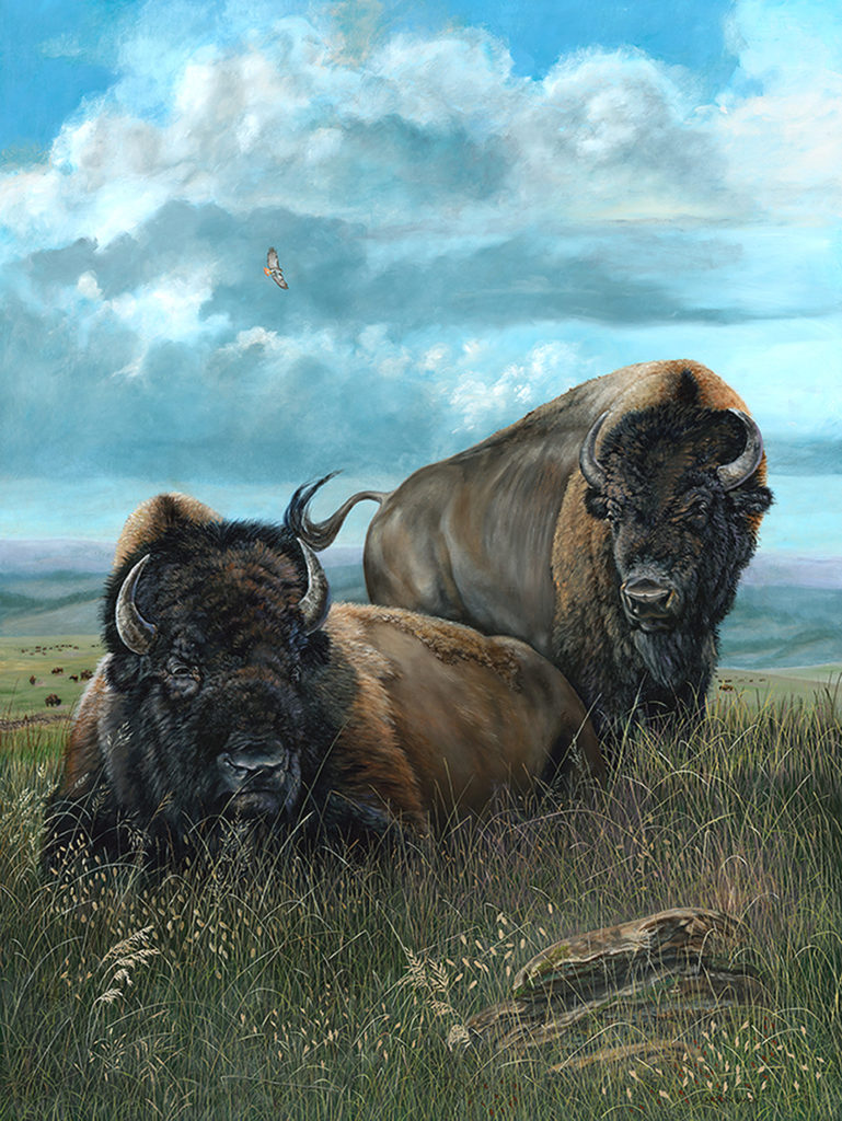 Two bison resting in an open field