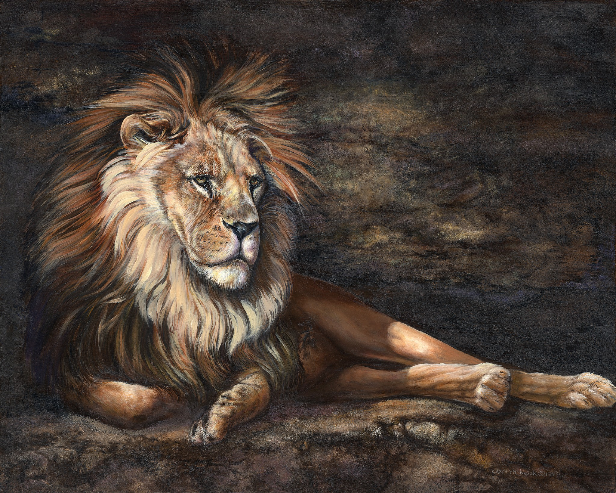 A lion rests after a long day