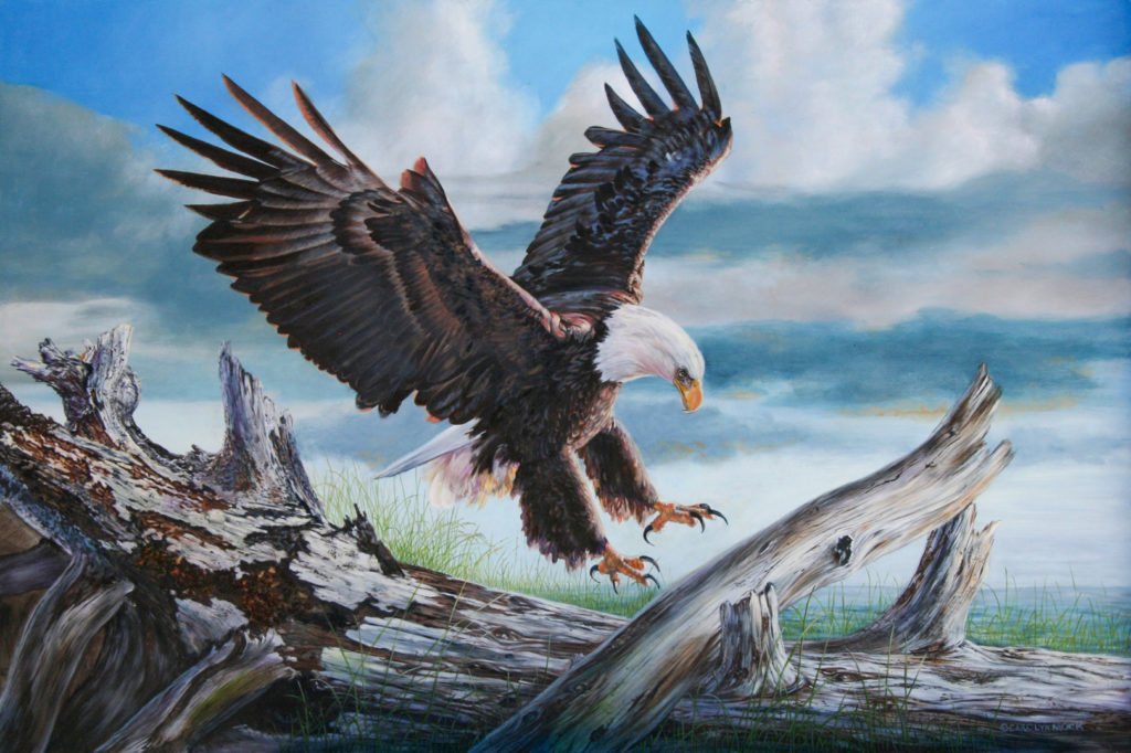 An eagle descends with it's talons open to land