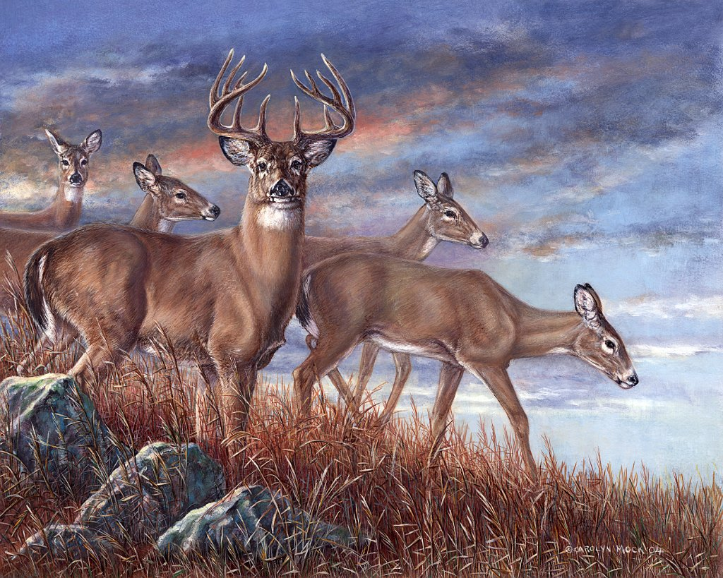 A herd of deer in the evening hours on a grassy hill