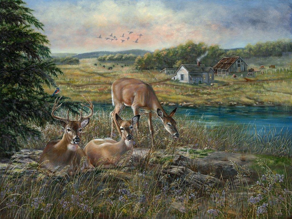 a herd of deer by the water in a field