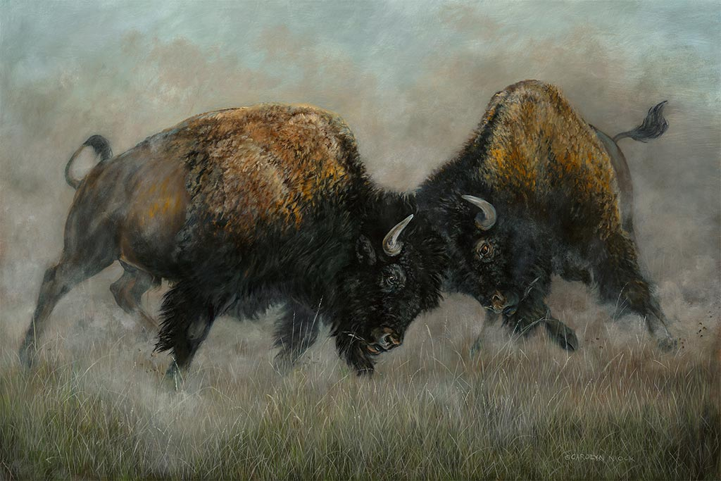 Two bison butt heads in a field
