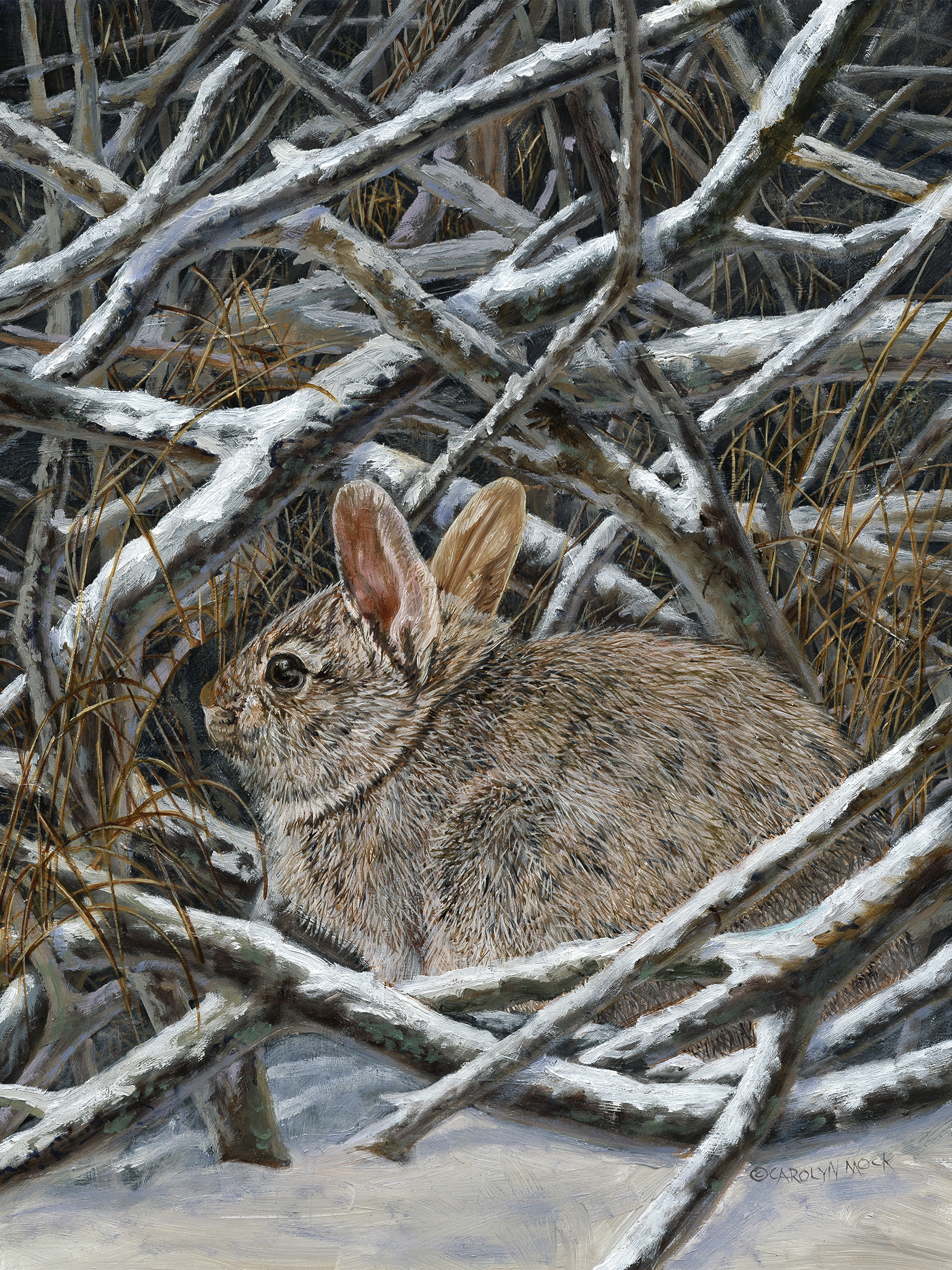A small bunny takes shelter in some sticks and snow