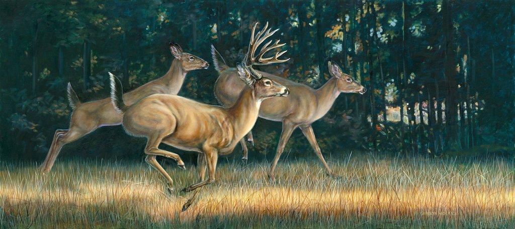 A herd of deer run through a field