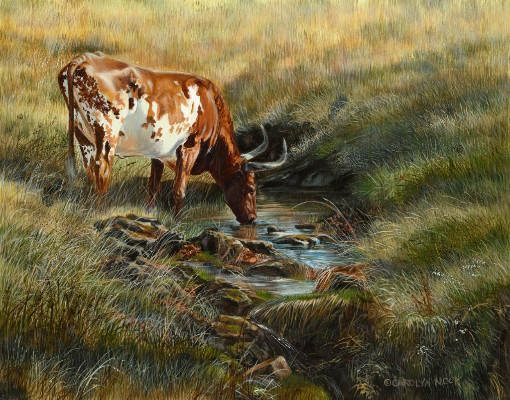 A bull takes a drink from stream