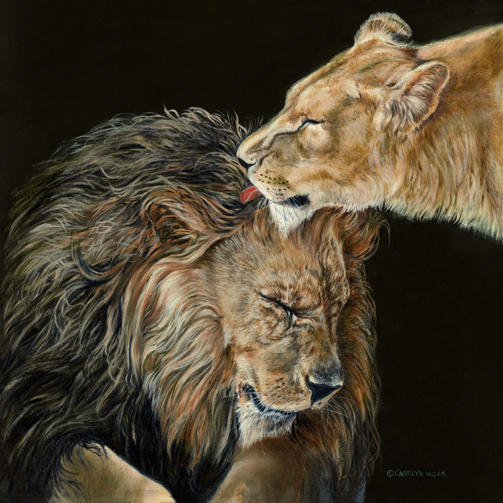 A lion licks the head of another