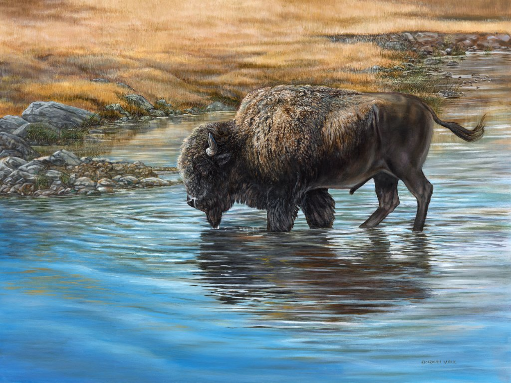 A bison drinking from a river