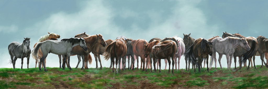 A herd of horses huddle to warm themselves in the morning hours