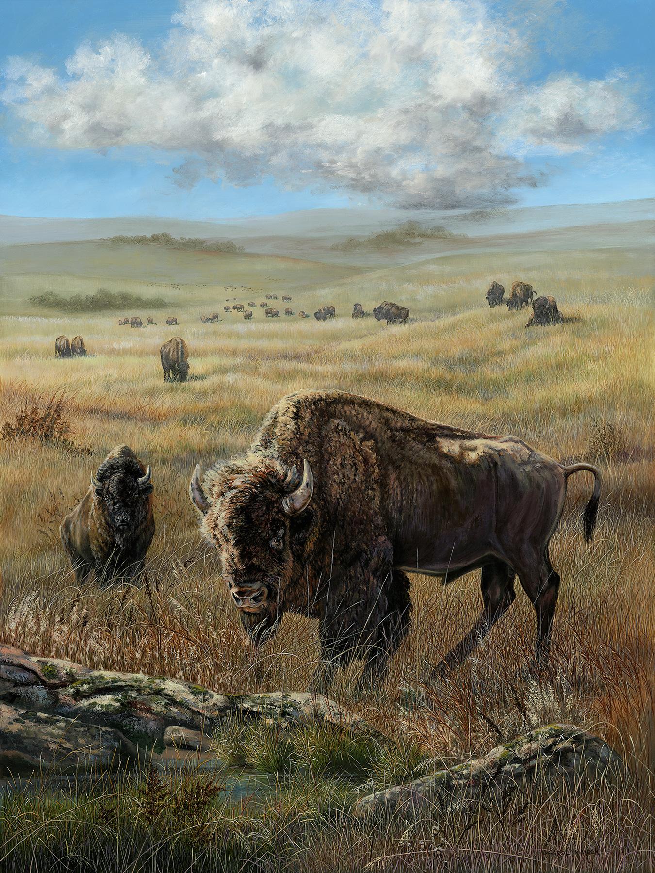 A herd of bison graze in a field