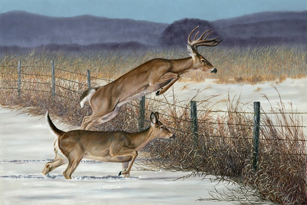 Two deer running through the snow and jumping a fence