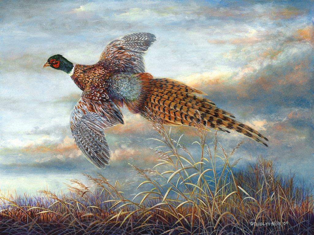 A bird takes flight in an open field