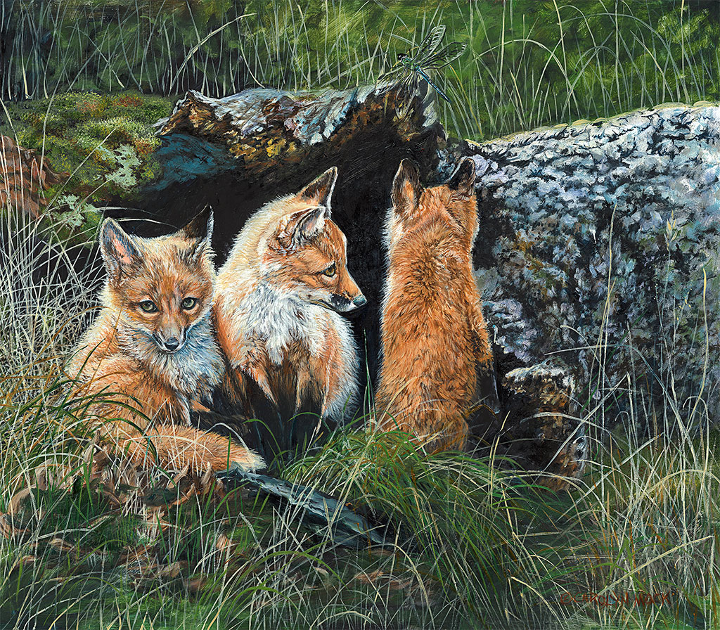 Three young foxes hide in a field