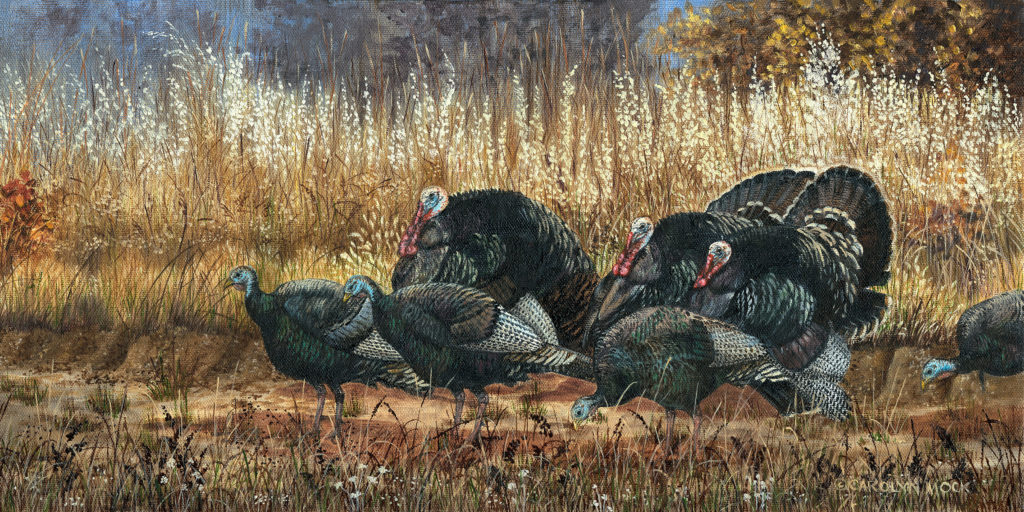 A group of turkey stand in a field of tall grass