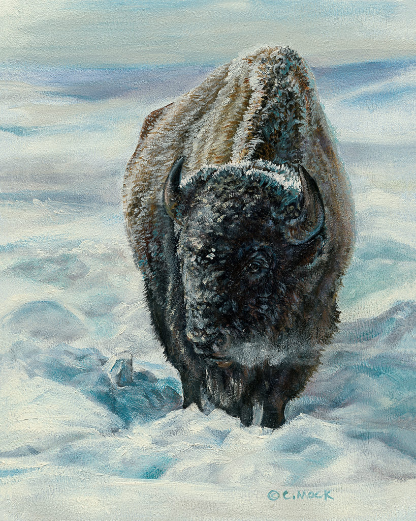 A bison takes a breath standing in a snow covered field